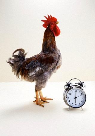 Как правильно выбрать будильник