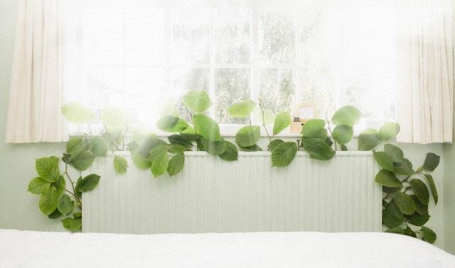 Целебные травы улучшающие сон